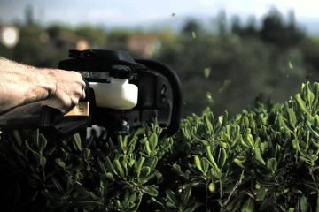 Hedge & Tree Trimming
