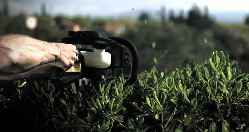 ri-ct-hedge-trimming-1
